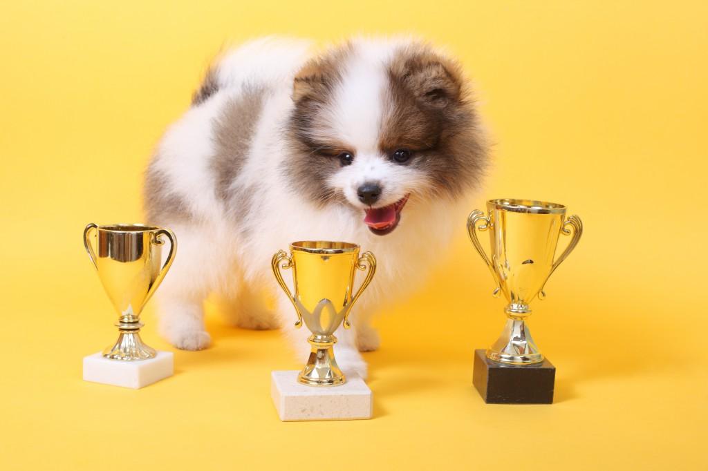 dog_prize